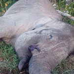 TNBBS Libatkan Polisi Usut Kematian Yongki (Gajah)