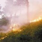 Taman Nasional di Lampung Terbakar