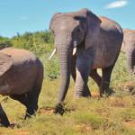 Tiga Gajah Rusak Pipa Air Bersih