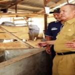 Lampung Bersiap Menjadi Lumbung Daging Nasional