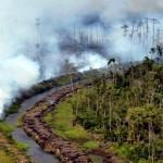 BPBD Lampung Waspadai Kebakaran Hutan