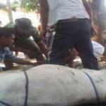 Lampung Perbanyak Juru Sembelih Halal
