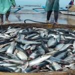 DKP Lampung Targetkan Peningkatan Produksi Ikan