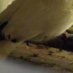Polisi Pelabuhan dan Petugas Karantina Sita Tiga Ekor Burung Langka