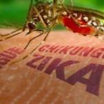 Nyamuk Pembawa Wabah DBD Membawa Zika