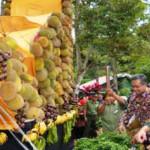 Ada destinasi wisata baru di Bandar Lampung, namanya Kampung Hutan Durian Sumber Agung