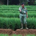 Baru Empat Kecamatan yang Punya Lahan Percontohan Pertanian