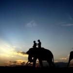 Pemprov Lampung akan menggelar kegiatan berskala Nasional di Taman Nasional Way Kambas
