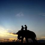 Taman Nasional Way Kambas Jadi Taman Warisan ASEAN ke-36