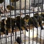 Pengiriman Ribuan Ekor Burung Digagalkan