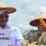 Pj.Sekda Provinsi Lampung hadiri Panen Perdana Jagung di Way Kanan
