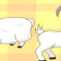 kambing-dan-domba
