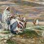 yesus-mengutus-70-murid
