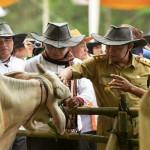 Keberhasilan Pembangunan Bidang Pertanian Provinsi Lampung tahun 2016