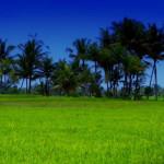 Jaringan Irigasi Diperbaiki, Puluhan Ribu Hektare Sawah Lampung Kembali Berfungsi