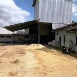 Warga Desa Way Gelam Keluhkan Debu Limbah Pabrik Gabah