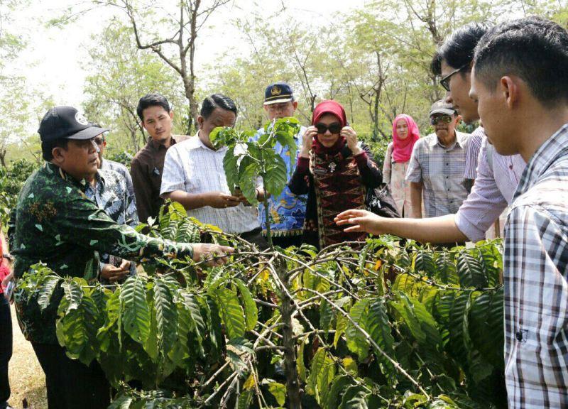 Asisten Bidang Ekonomi dan Pembangunan Pemerintah Provinsi Lampung, Adeham, saat meninjau lokasi Edufarm PT Nestle di Desa Sukarame, Kecamatan Talangpadang, Tanggamus, Kamis 10 Agustus 2017.