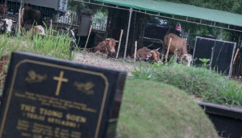 Hewan-hewan kurban yang dijajakan oleh pedagang di TPU Tanah Kusir, Jakarta, 22 Agustus 2017. TEMPO/Rizki Putra.