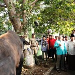 Gubernur Lampung M. Ridho Ficardo Kurban Satu Ekor Sapi
