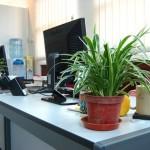 Wahai Para Bos, Tanaman Hijau di Kantor Meningkatkan Produktivitas Karyawan