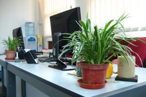 Tanaman Hijau di Kantor Meningkatkan Produktivitas Karyawan. (Sumber Foto : intisari.grid.id)