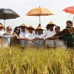 Kota Terpadu Mandiri Mesuji Lampung Terbaik Indonesia