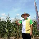 Gubernur Ridho Kembalikan Kejayaan Produksi Jagung Lampung