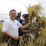 Lampung Swasembada Padi