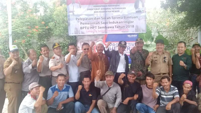 Kementan Hibahkan 95 Sapi Indukan Di Provinsi Lampung.