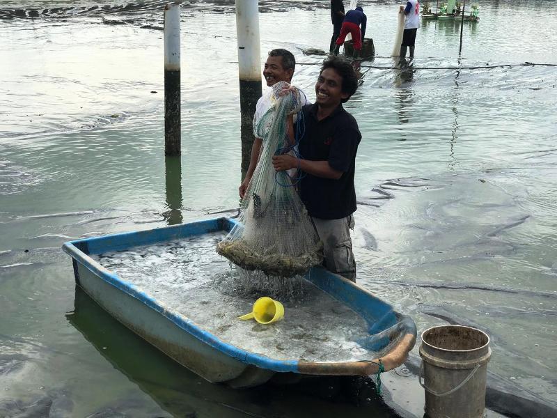 Tambak yang dikelola oleh 110 petambak mitra binaan Pertamina bersinergi dengan Perikanan Indonesia (Perindo) sejak tahun 2017, dimana saat itu dana sebesar Rp 8.550.000.000 disalurkan untuk kebutuhan pengembangan tambak udang.