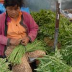 Harga Sayuran Turun, Petani Lampung Barat Ketar-Ketir