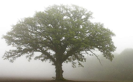Kerajaan-Allah-seperti-Pohon-Rindang