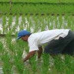 Petani Diminta Pertimbangkan Kebutuhan Air