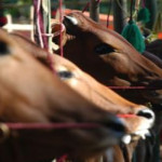 750 Hewan di Palas Divaksin Rabies