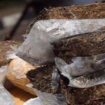 Ratusan Kilogram Ganja Ditemukan di Dusun Simpangsumur
