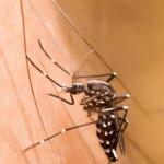 3 Hal yang Perlu Diketahui tentang Zika Virus