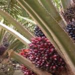 Sektor Pertanian Lampung Diminati Australia dan Portugal