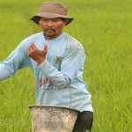 Provinsi Lampung telah terapkan distribusi pupuk bersubsidi dengan pola billing system