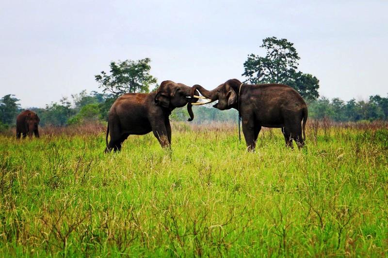 Gajah-gajah di Taman Nasional Way Kambas Lampung Timur. Foto : http://yopiefranz.com