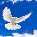 Cara Pandang Ilahi